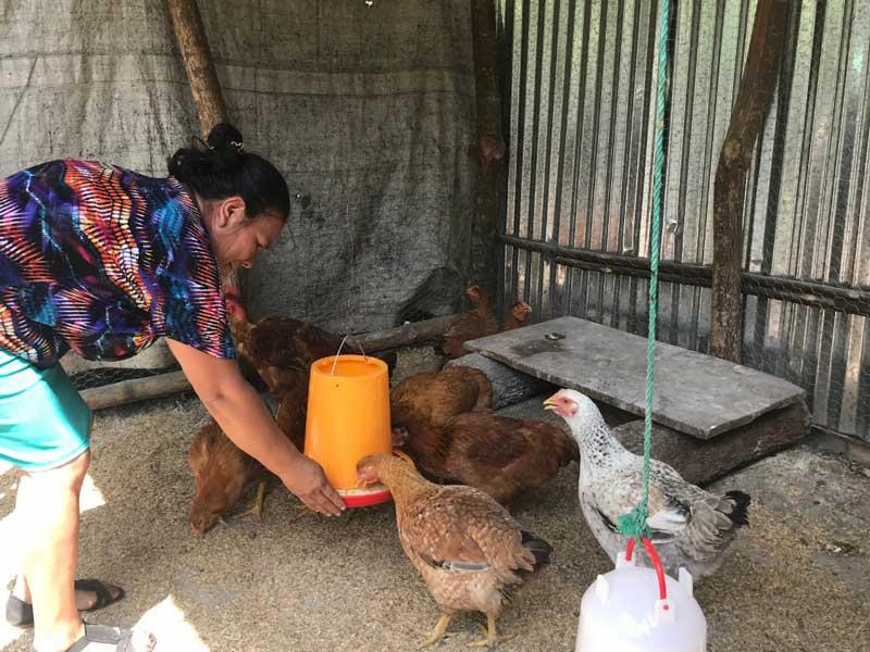 Alimentación con concentrado artesanal para aves