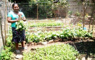 Mujer cosechando